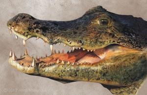 Crocodile-pastel-pencil-drawing