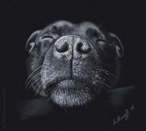 Sleeping-dog-Staffordshire-Bull-Terrier-drawing
